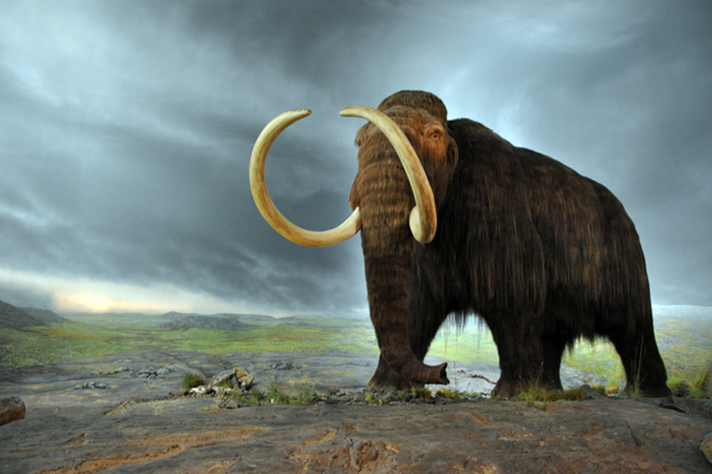 Mammoth_Feature_645x429.jpg#asset:2609