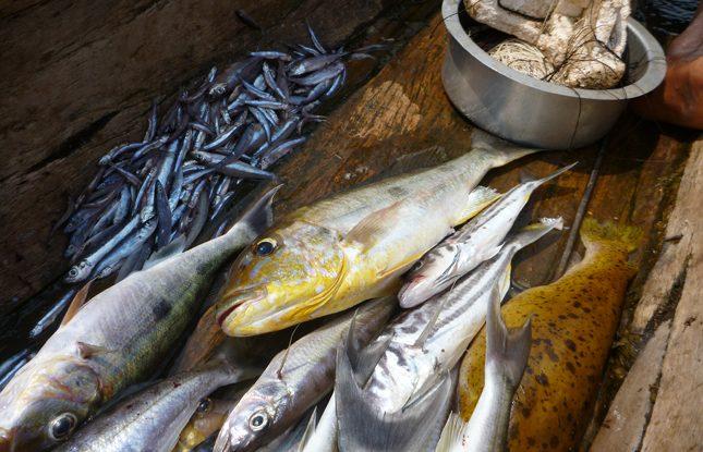 Freshwater Fishing Slideshow3 645X425
