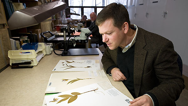 Ken Cameron, director of the Wisconsin State Herbarium and professor of botany, looks over a selection of orchid samples — his expertise — inside Birge Hall in 2008. Cameron was honored earlier this month for his public outreach on behalf of plant research and conservation.  Photo by Bryce Richter, University Communications.