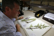 Kenneth Cameron, director of the Wisconsin State Herbarium, examines a dried specimen of purple loosestrife, one of the invasive Great Lakes plants being digitized with support from the National Science Foundation. (Photos by David Tenenbaum, University Communications)